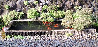 エキナカに池