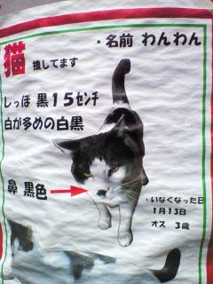 猫捜しチラシ