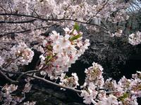 早稲田・神田川沿い