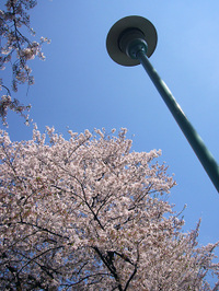 駒込・染井霊園