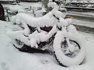 樹氷なバイク