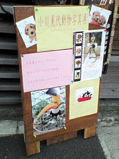 小川晃代 動物写真展